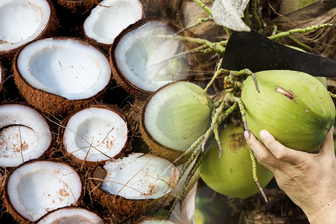 best quality coconut