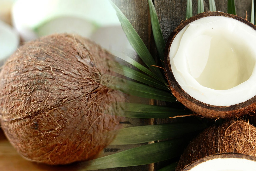 top ten countries with most coconut production