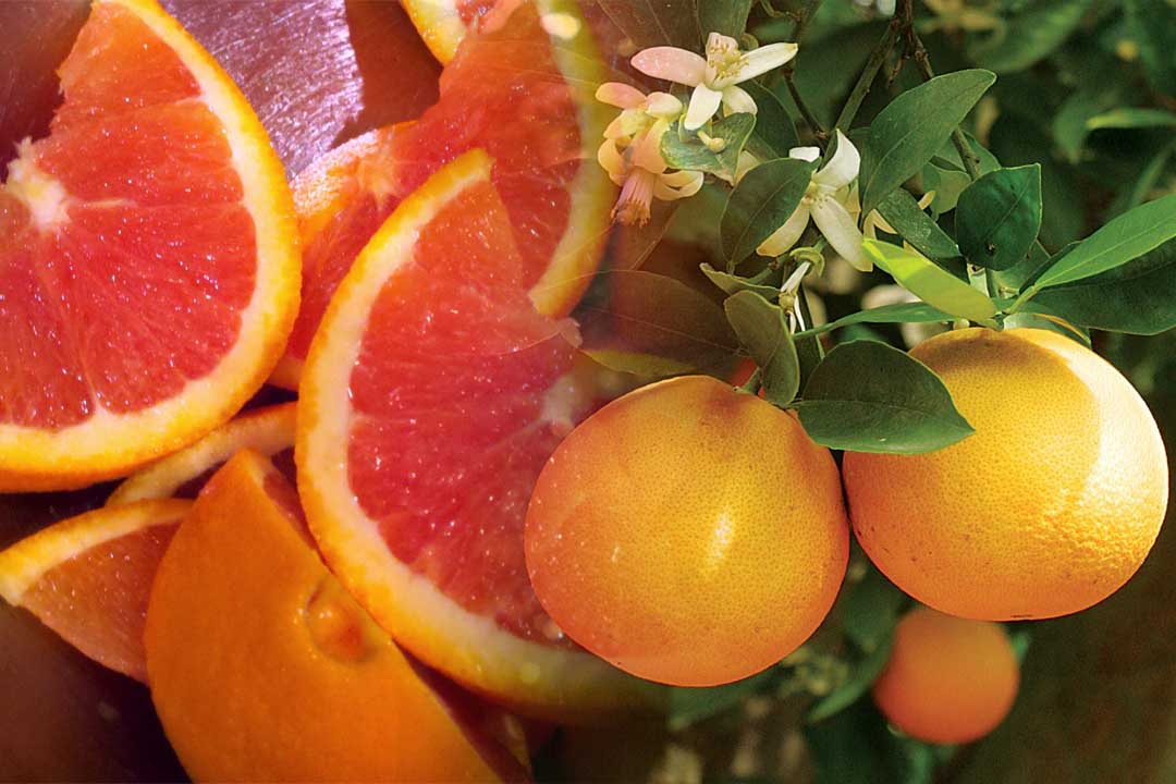 top countries with oranges production