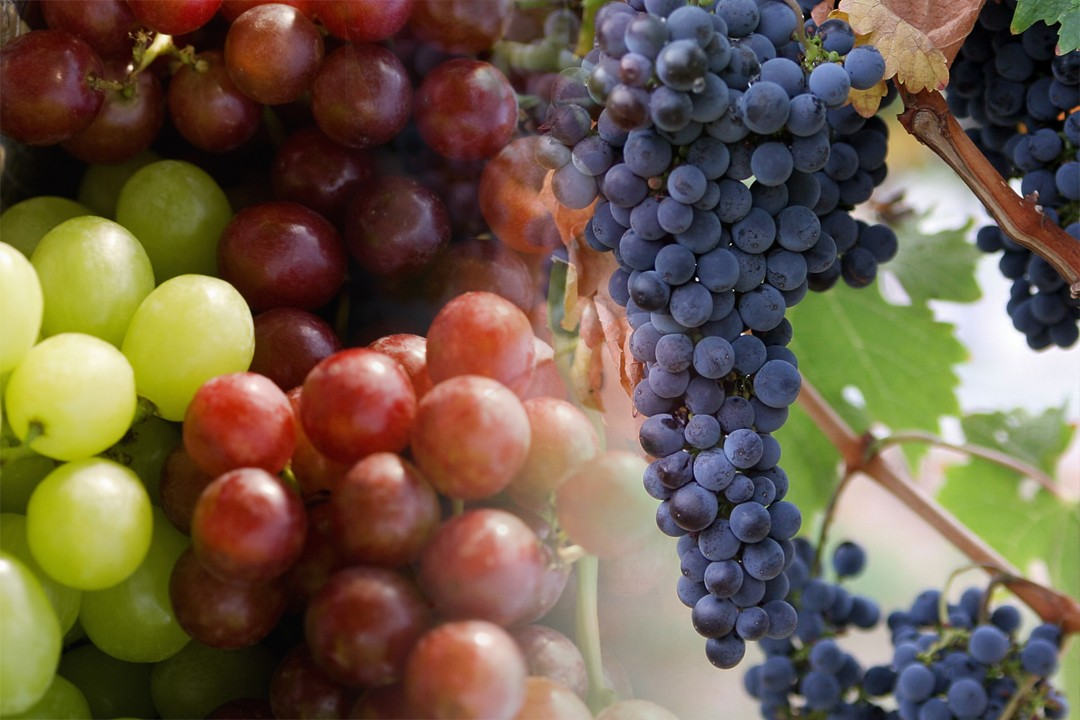 top countries which produces most grapes in the world