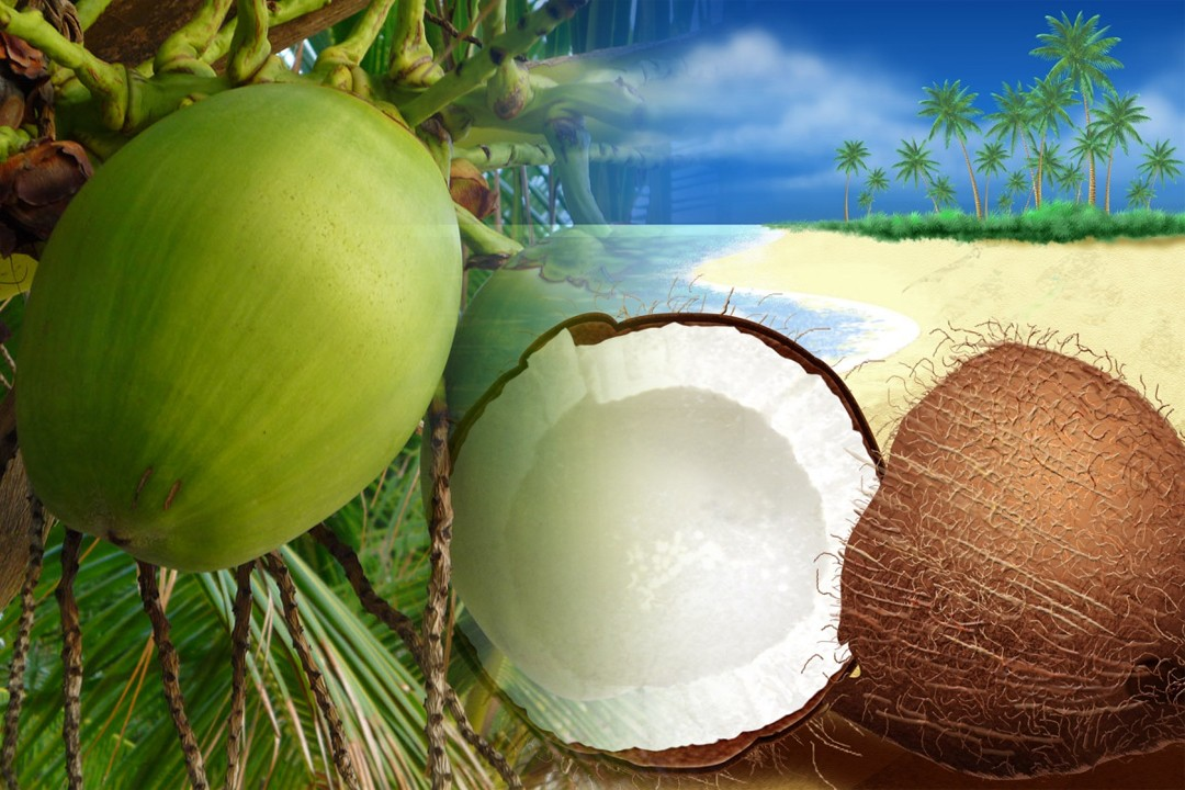 countries with most coconut production