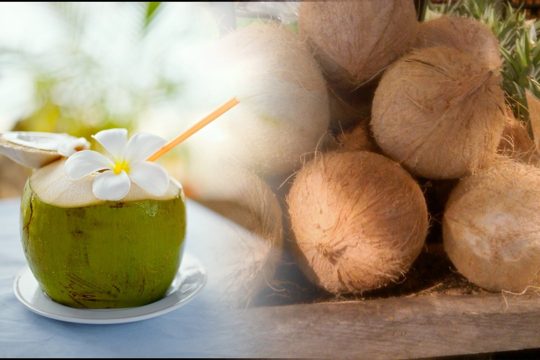 countries with most coconut production in the world