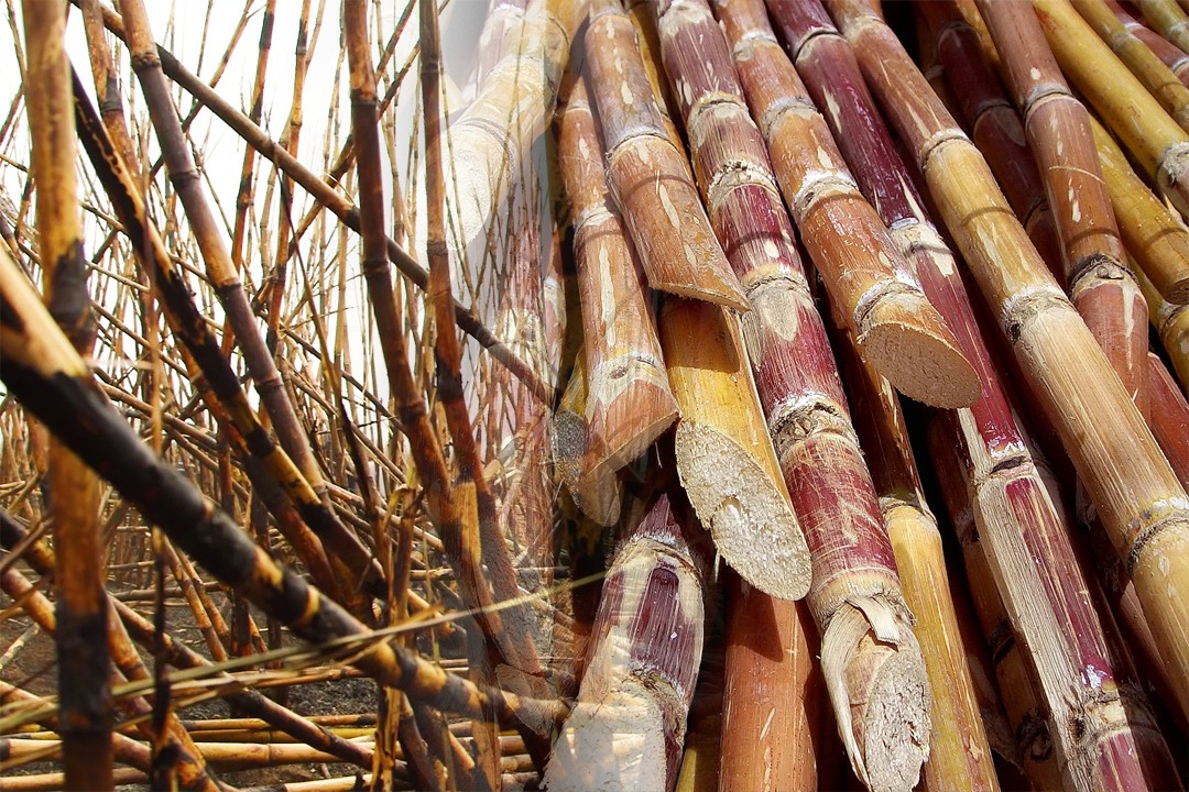 sugarcane producing countries in the world