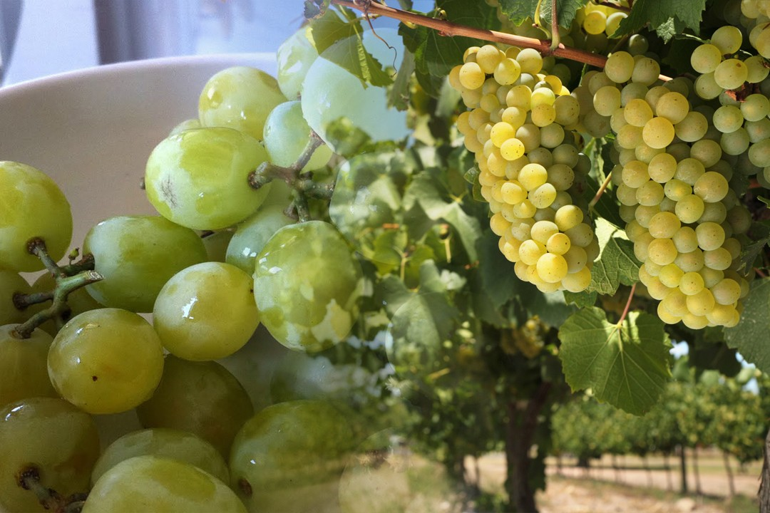 top countries with most grape production