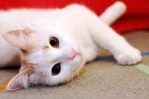 PET CAT POPULATION