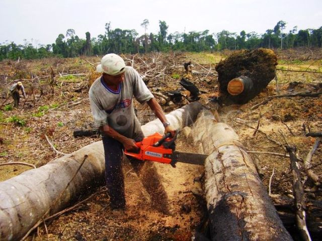 TOP 10 COUNTRIES WITH HIGHEST Deforestation