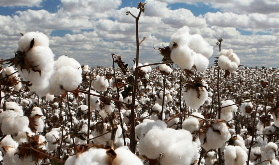 Top Ten Cotton Producing Countries in the World
