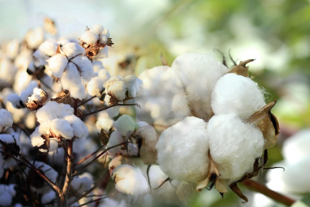 cotton production countries
