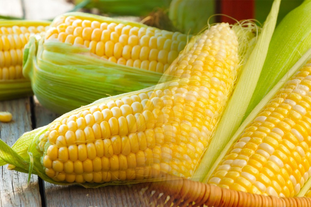top corn producing countries