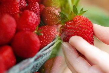 best quality strawberries from different countries