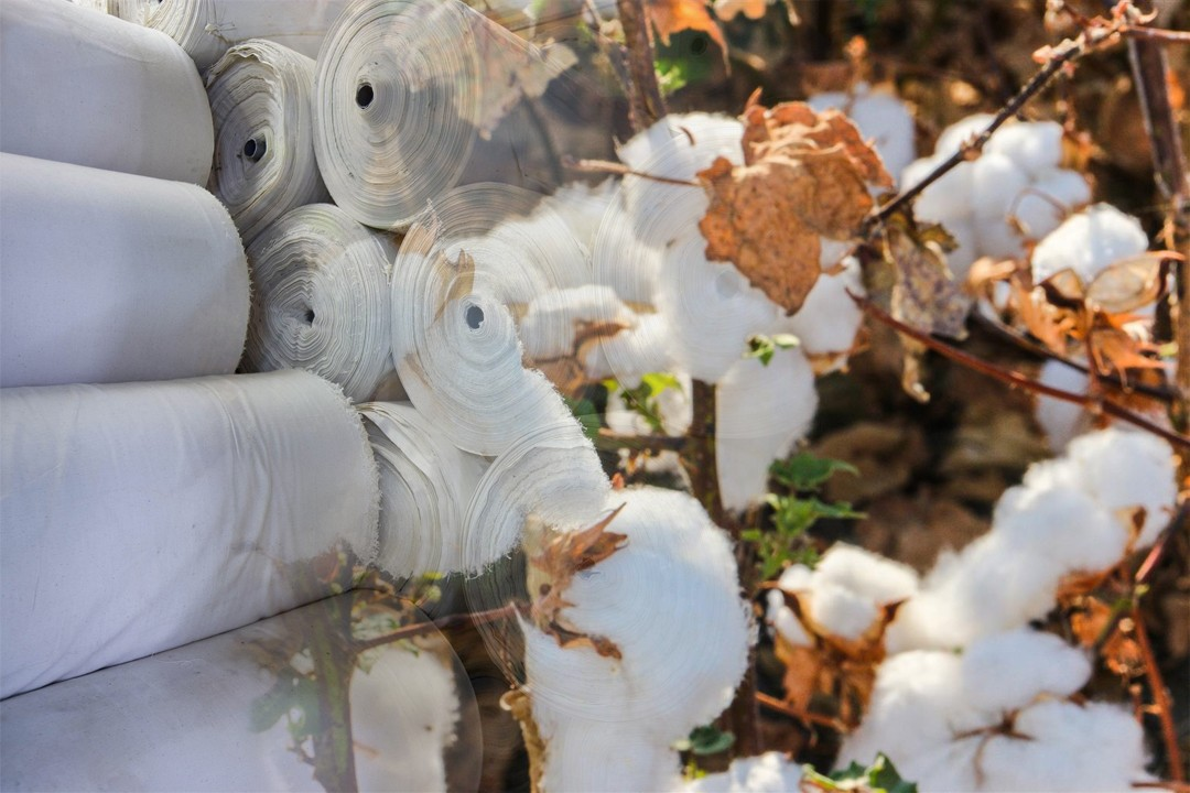 top cotton exporting countries