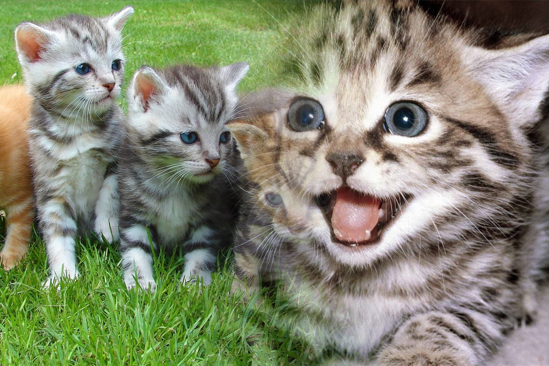 top countries with most cats