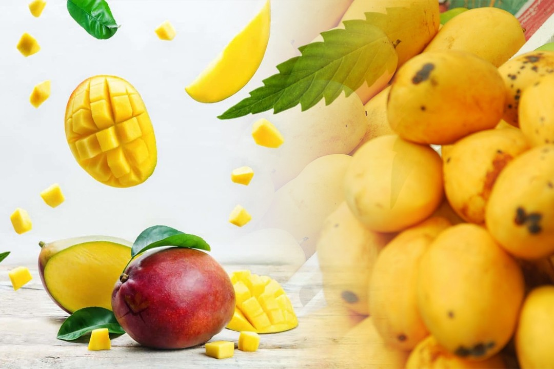 mangoes from different regions