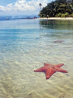Playa de las stars (Panama)