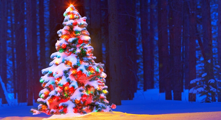Christmas Trees industry