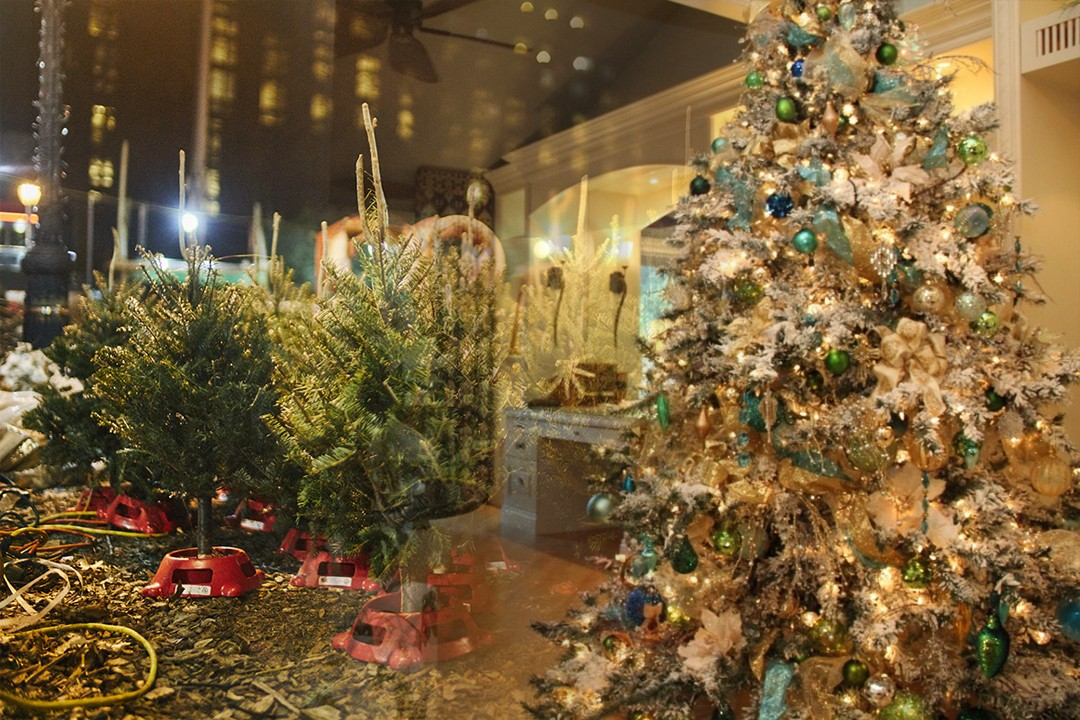 different countries exporting Christmas trees in the world