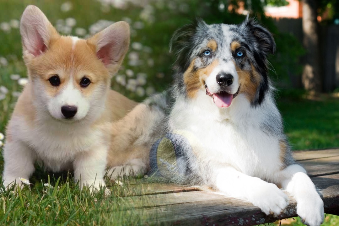 pet dogs in different countries