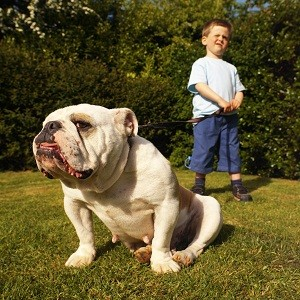 Top 10 Countries with Most Pet Dogs