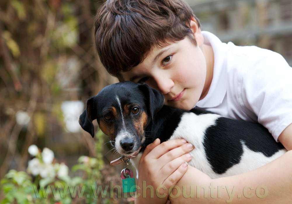 country with most pet dogs