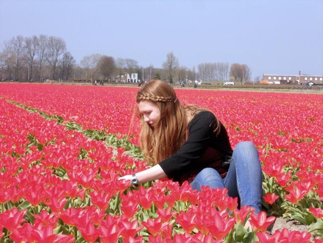 Netherlands Flower Fields