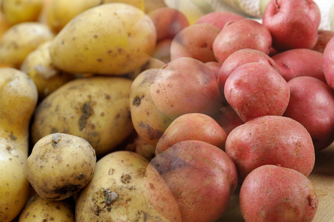 top countries with potato production