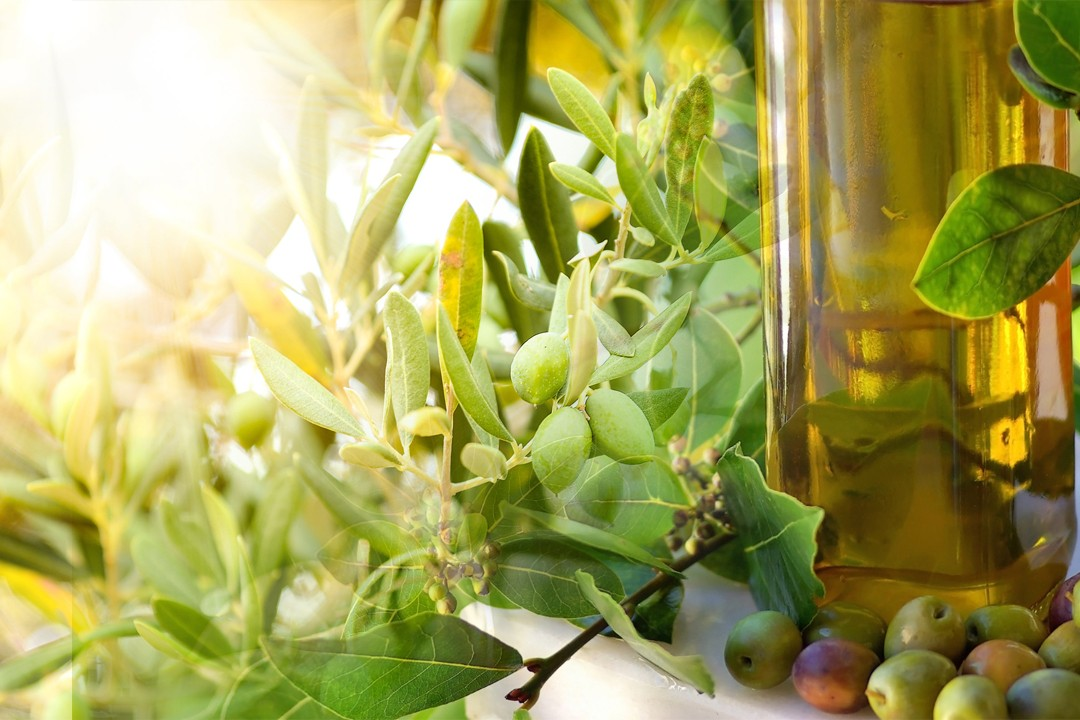 countries with best olive oil production