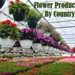 Which Country Produces Most Flowers?