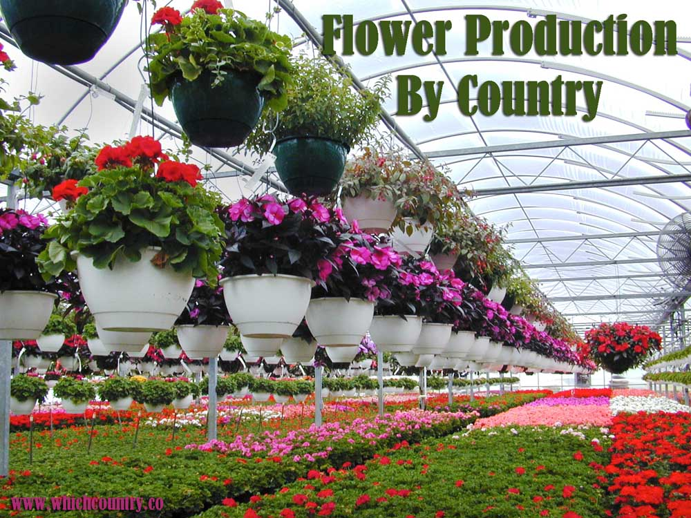 flower production