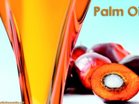 pal oil