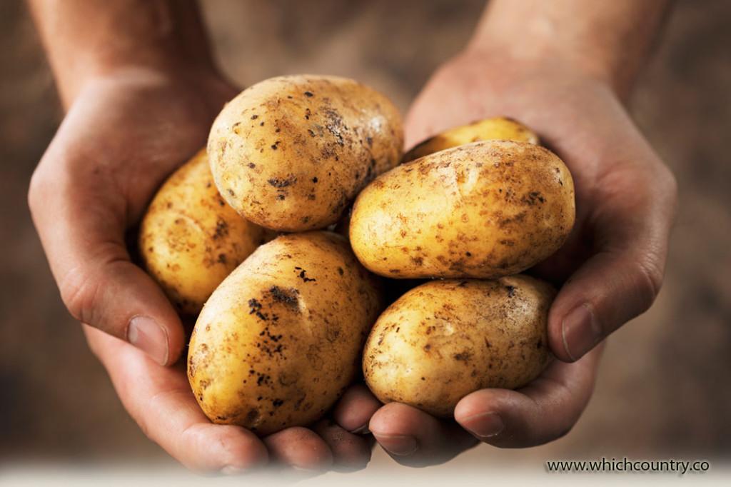 top ten potato producing countries