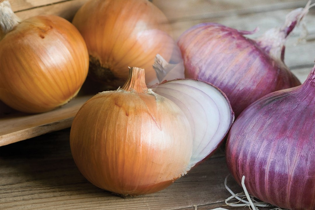 countries with most onion production