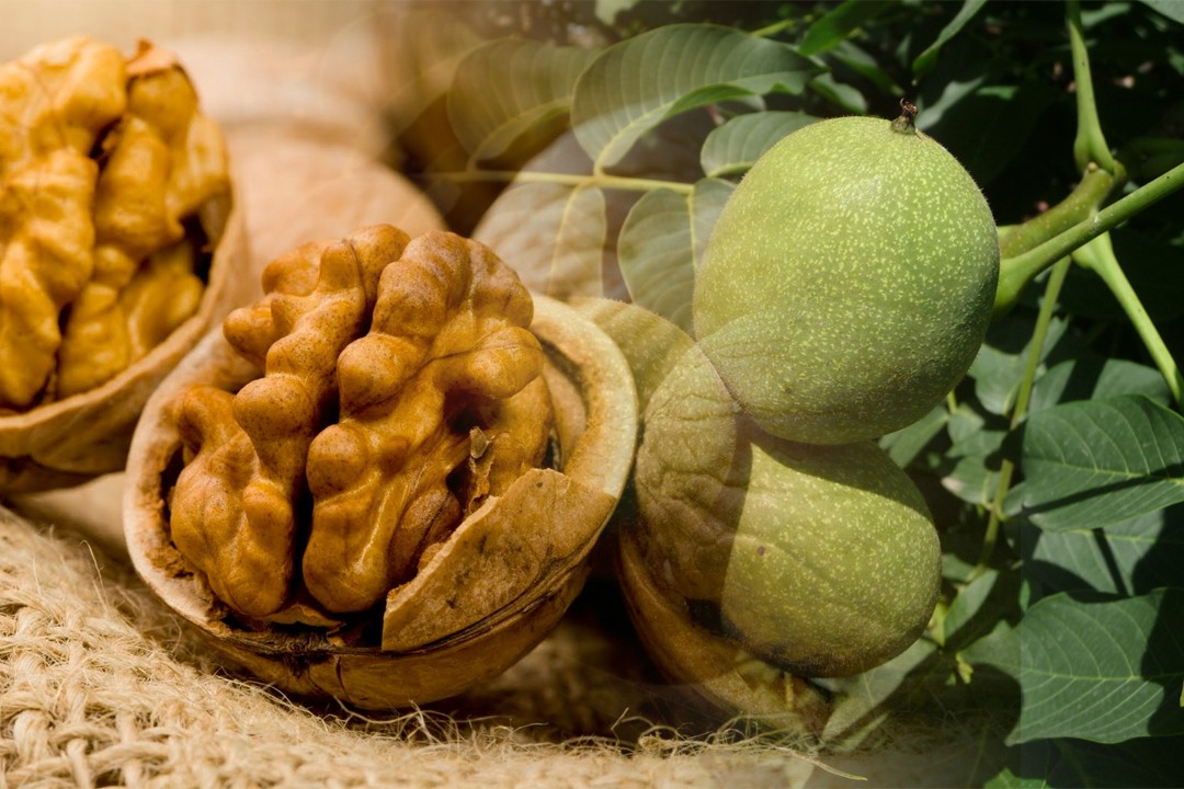 best walnut from different countries