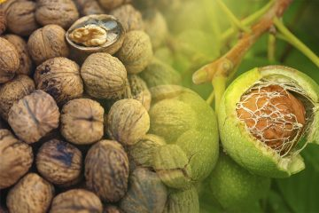 countries with most walnut production in the world