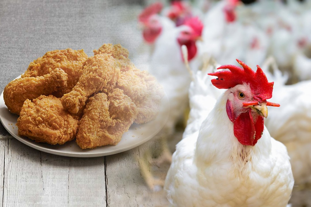 most chicken producing countries