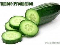 cucumber production by country