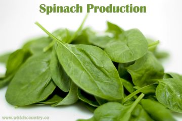 top ten largest Spinach Producers in the world