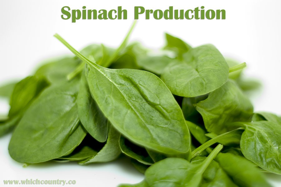 Spinach Producers